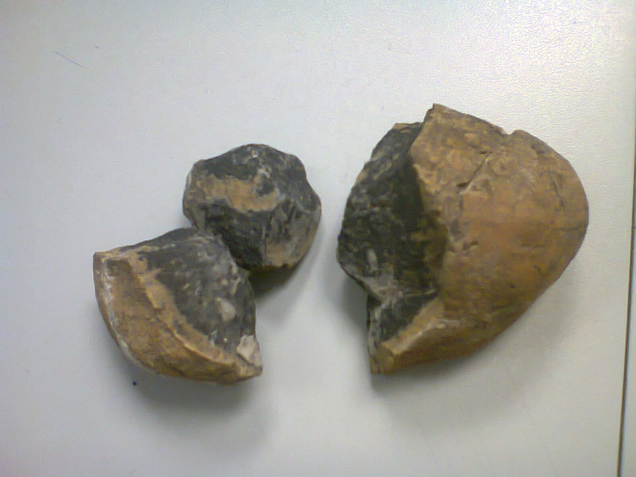 Huevo prehistorico encontrado en el desierto de Icamole Foto2015