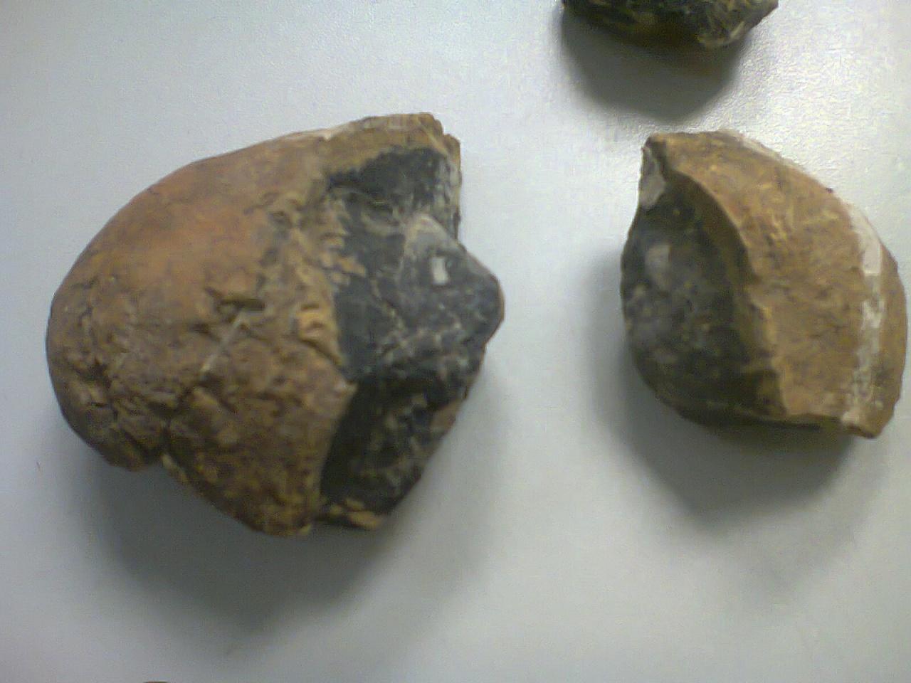 Huevo prehistorico encontrado en el desierto de Icamole Foto2017